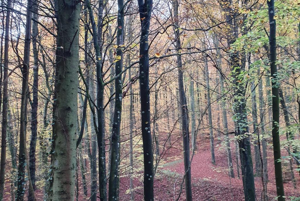 Bekanntschaften odenwald